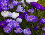 Návrhy, realizace a celoroční údržba vaší zahrady nebo městského parku