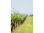 Sudová vína z Moravy