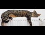 Dodávky tepelné energie, prodej plynových kotlů a spotřebičů, PENB, zásobování teplem