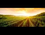 Vinařské potřeby, nápojová technika