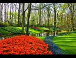 Odolné květinové cibule na záhony do měst a parků, mechanizované sázení