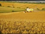 Zemědělské družstvo Fryšták nabízí obiloviny a krmivo pro zvířata