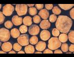 Zpracování palivového dřeva v dřevoskladu na Brněnsku, rozvoz dřeva