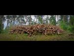 Lesnické služby – čištění lesů, výsadba, výkup lesních pozemků, doprava dřeva