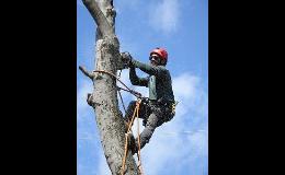 Rizikové kácení stromů ArboKohout Vysočina
