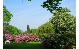 Odborná péče o stromy a zeleň, arboristické služby