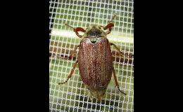 Sítě proti hmyzu do oken a dveří - Pavel Knězek, s.r.o. Zlínsko