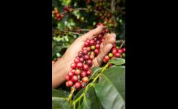 Bio káva s výrazným aroma CAFÉ REPUBLICA EXCLUSIVE