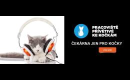 Veterinární pracoviště přívětivé ke kočkám - Opava