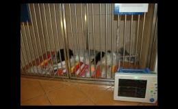 Zákroky v inhalační anestezii, pooperační péče