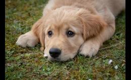 Profesionální veterinární péče pro psy a kočky Uherské Hradiště