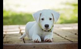 Pojistěte svého psa pro případné zdravotní komplikace