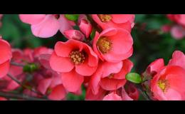 Květiny, substráty, hnojiva v zahradnictví v Břeclavi