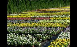 Pěstování sezónních květin - Zahradní centrum Malinkovič
