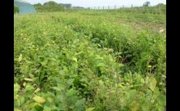 Pěstování lesních sazenic na poli - PROPLANT GROUP s.r.o.