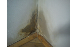 Dezinfekce bytových i nebytových prostor - Deratizace Konečný Praha