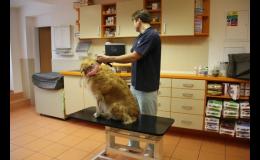 Profesionální veterinární vyšetření psů, koček a dalších zvířat