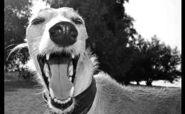 Prevence zdravého chrupu a dásní psů a koček