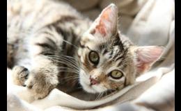 Speciální ordinace pro kočky - Veterinární klinika Palackého Opava