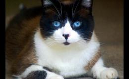Vyšetření koček bez stresu a bolesti -  Veterinární klinika Palackého Opava