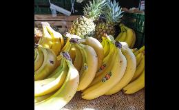 Zelená zahrada Znojmo nabízí chutné tropické ovoce