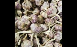 Český česnek do každé kuchyně z prodejny Zelená zahrada