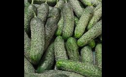 Prodej sezónní zeleniny, okurek, brambor od regionální pěstitelů