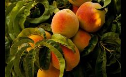 Ovocné stromy a keře v Zelené zahradě Znojmo