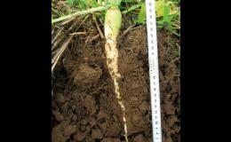 Pěstební technologie TerraLife od VP AGRO, spol. s r.o. zlepšují kvalitu půdy a následných plodin