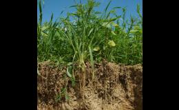 Pěstební technologie TerraLife od VP AGRO, spol. s r.o. zajišťují ideální podmínky pro všechny osevní postupy.