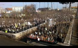 Zahradnické práce a úpravy zahrad v Opavě