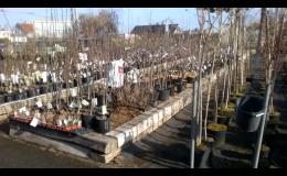 Prodej sadby rostlin na zahradu i balkon