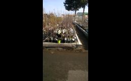 Široký výběr balkonových a zahradních rostlin