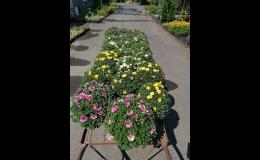 Vše potřebné pro zahradu - RAIDA-GARDENCENTRUM Opava
