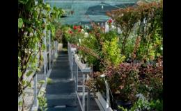 Kvalitní výsadba rostlin pro vaši zahradu