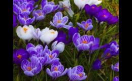Květinová výsadba pro vaši zahradu