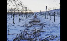 Úrodné vinice v Čejkovicích