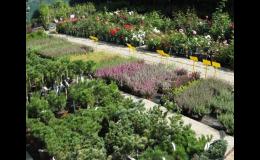 Rostliny pro vaši zahradu