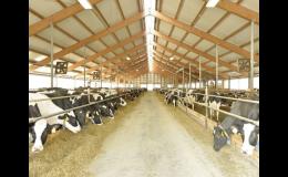 Čerstvé mléko z vlastního kravína pro výrobu sýrů