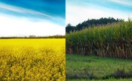 Pěstování obilnin, pícnin, jetelovin a vojtěšky - Ludmírov