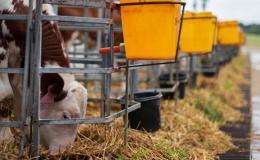 Prodej čerstvého mléka a masa Ludmírov