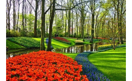 Strojová výsadba květinových cibulovin - Verver Export Miroslav u Znojma