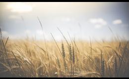 Zemědělské družstvo Fryšták prodává obilniny a krmivo