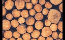 Proschlá polena z tvrdého dřeva - Pila Lubná Zlínský kraj