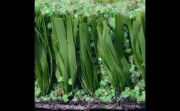 Umělá tráva se zásypem křemičitým pískem obaleným gumovým povlakem