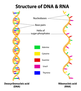 Určování DNA nejnovějšími metodami - Biogen s.r.o.
