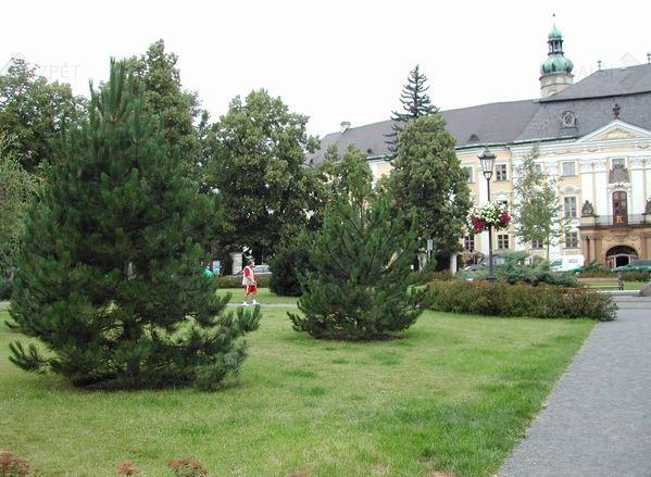 Sadové úpravy: Údržba zeleně, zakládání záhonů a trávníků i další zahradnické práce