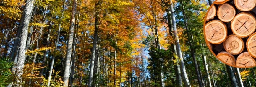 Ministerstvo zemědělství nabízí vlastníkům lesa dotace na poradenské služby