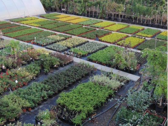 Zahradnictví Havlíček se zaměřuje na pěstování a prodej okrasných rostlin