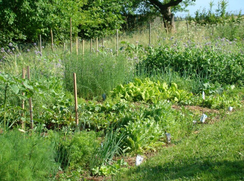 Ekologická bylinková zahrada, ubytování, Česká Kanada, bylinková zahrádka